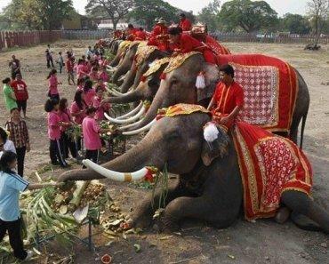 Thailand festivals Elephant Buffet
