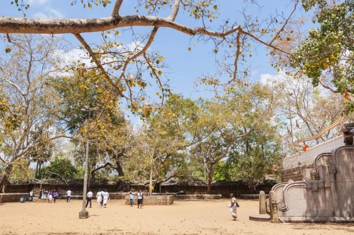 arbre bodhi - anuradhapura - sri lanka