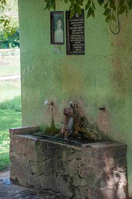 singe gal vihara polonnaruwa - sri lanka