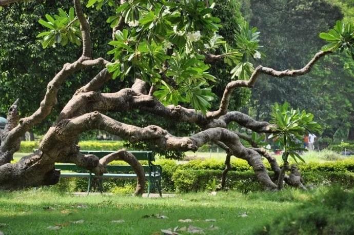 jardin victoria memorial calcutta - inde