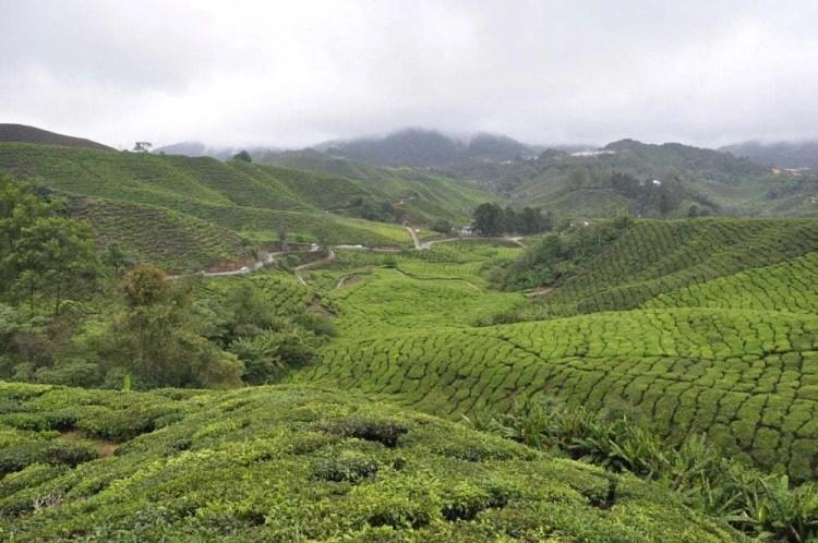 Cameron Highlands - Malaisie 2014