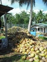 cocotiers ban krut