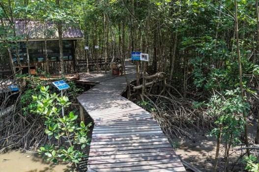 mangrove trat thailande