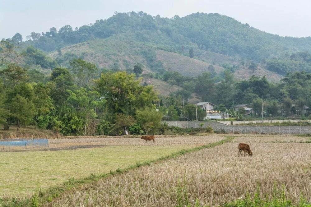 village karen elephant baan ruammit