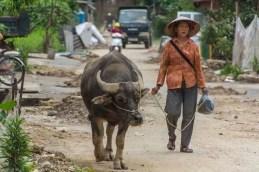 moto nord Vietnam - buffle accompagne femme a Tam Son