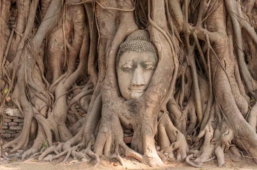 tete bouddha encastree Wat Mahathat - Ayutthaya