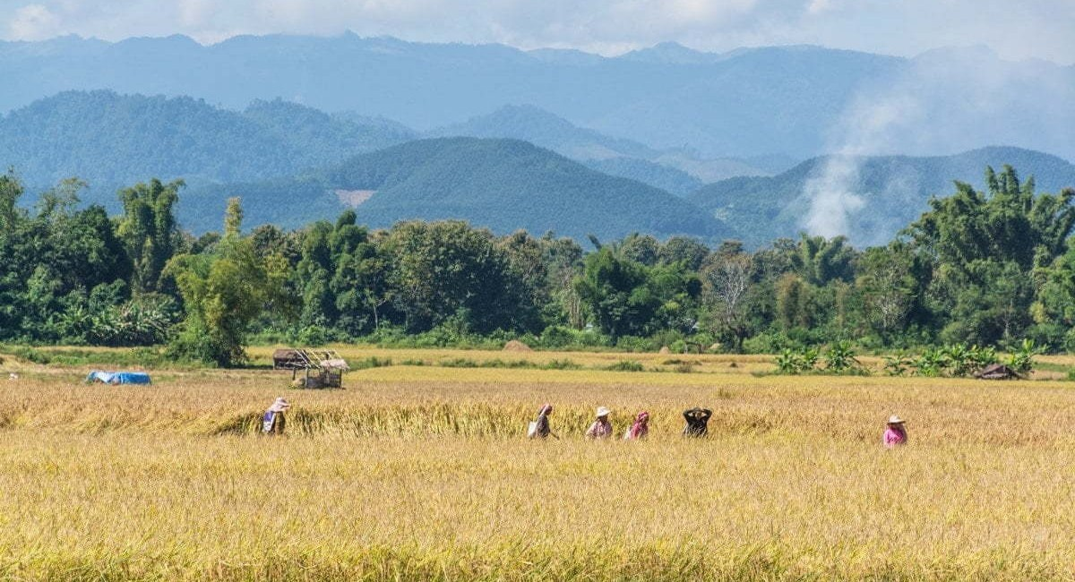 paysage Luang Namtha - Laos