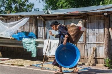 doi pha tang - chiang rai - thailande