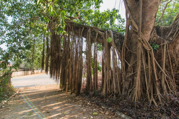 arbre fort carnot huay xai - laos