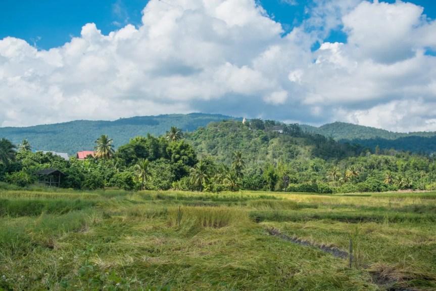 rizieres campagne autour doi inthanon - chiang mai 1