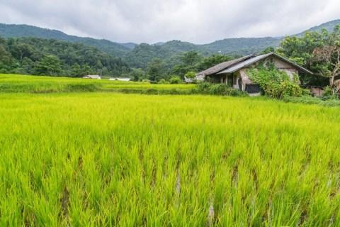 rizieres village ban mae klang doi inthanon