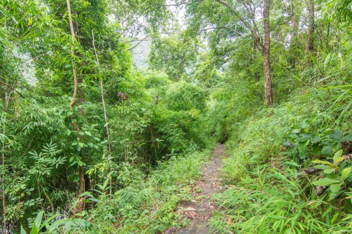 chemin menant en haut de wachirathan waterfall au doi inthanon - chiang mai