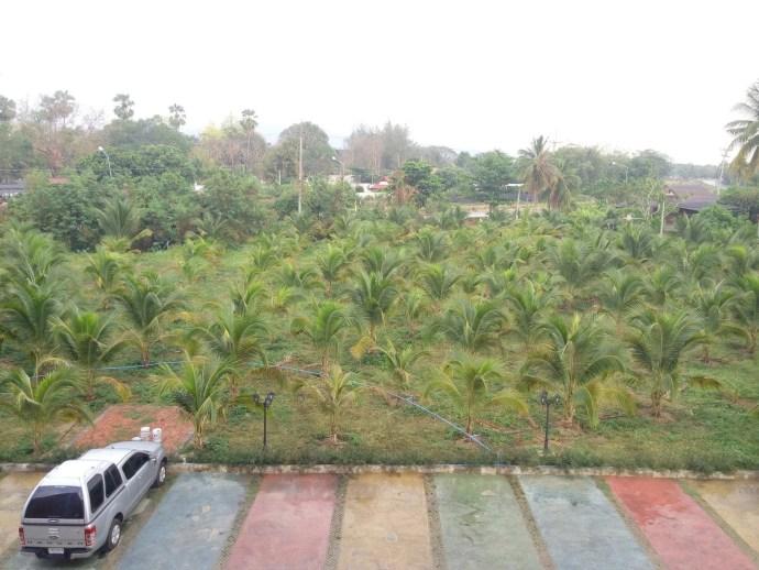 vue exterieur the coconut hotel lampang