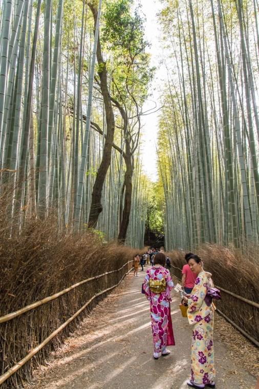 foret de bamboo kyoto