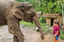 journee elephant steps chiang rai