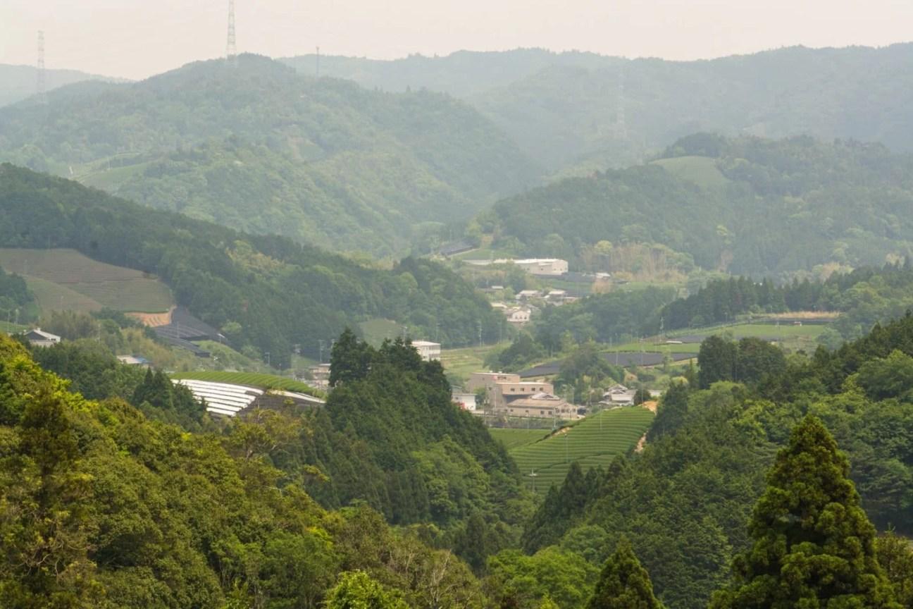 plantation thé wazuka - kyoto prefecture japon