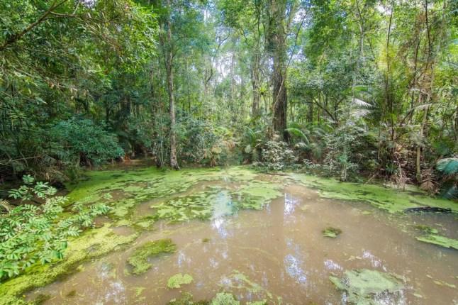 jungle trail visitor center parc national khao yai - thailande
