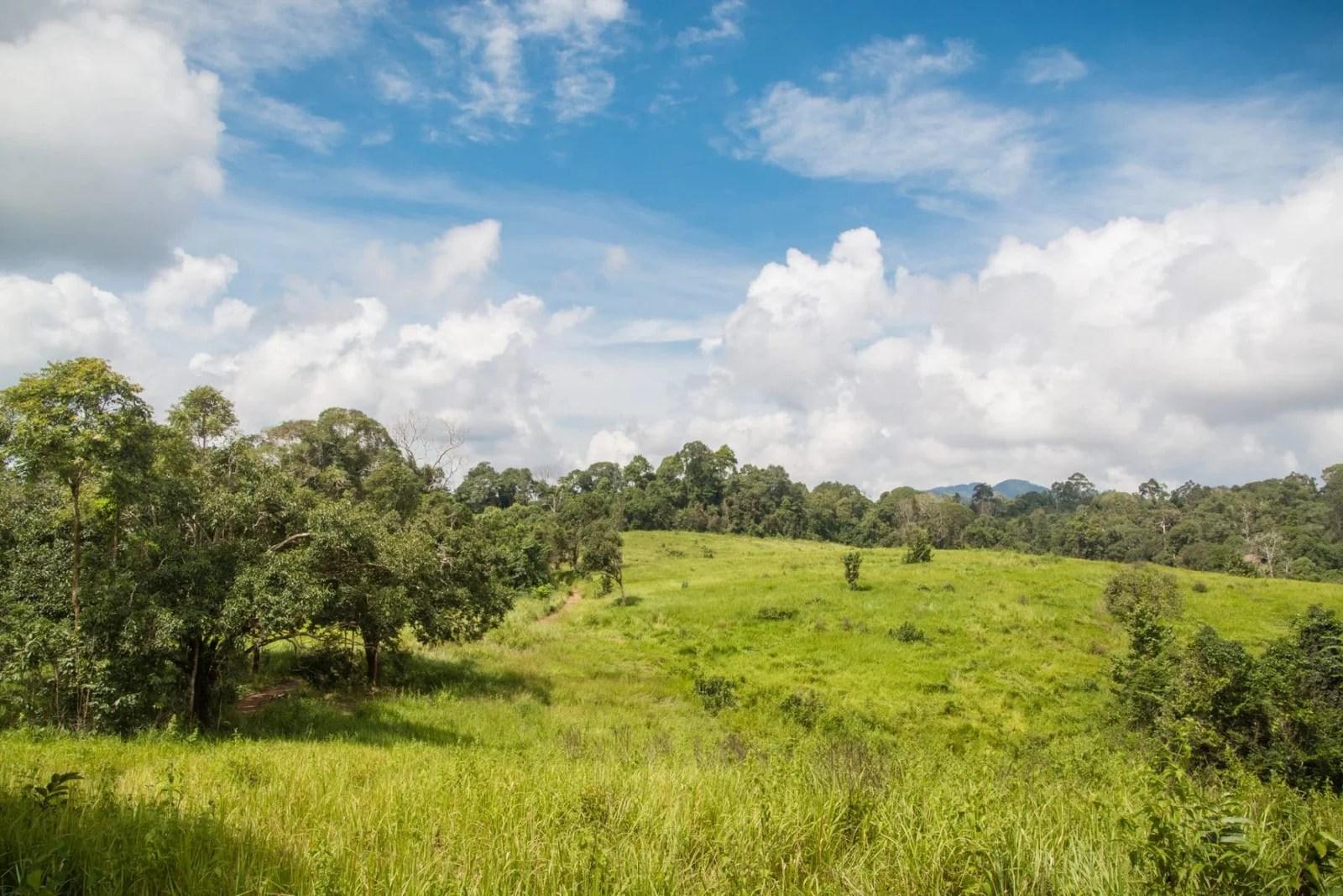 parc national khao yai - thailande