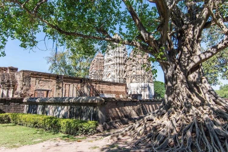 arbre jouxtant wat si sawai sukhothai