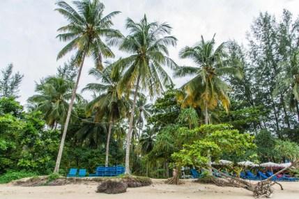 cocotiers plage - khao lak - thailande