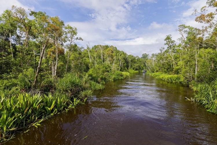 paysage parc national tanjung puting indonesie