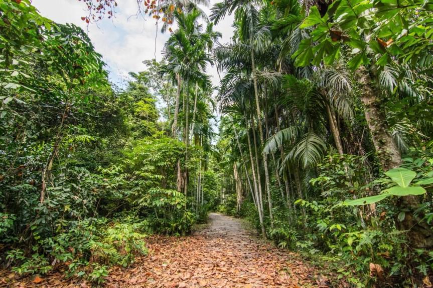sensory trail pulau ubin singapour