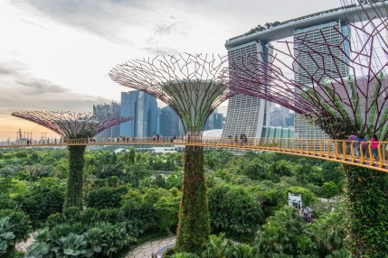 super tree grove ocbc skyway gardens by the bay singapour