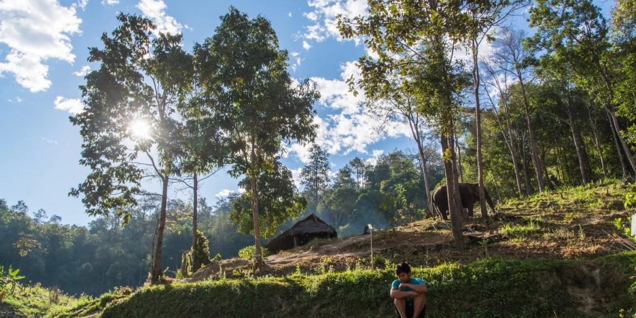 sanctuaire elephant nord chiang mai - thailande
