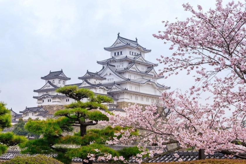sakuras printemps chateau himeji japon