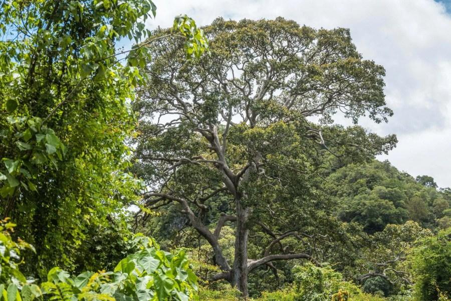 arbre vers village pecheurs dan sawit - chumphon