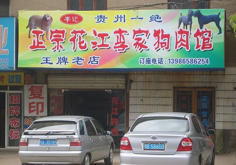 China's Dog Meat Festival – Cruelty or Culture?