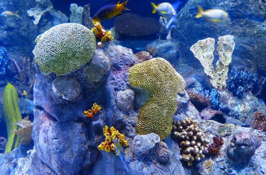 Thailand takes measure to combat coral bleaching