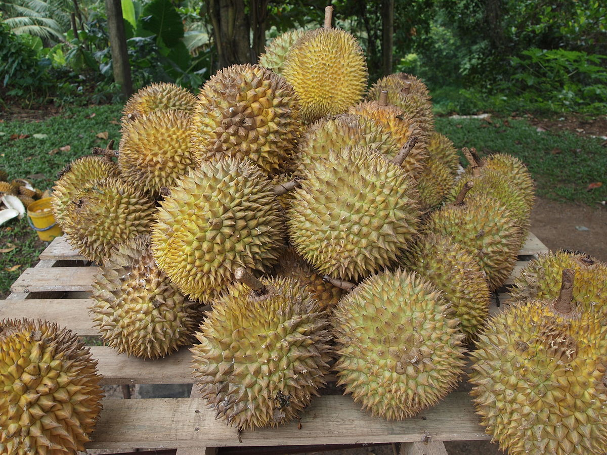 Agriculture Minister Blocks Vietnamese Durian Fraud