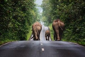 Wild elephant kills Kanchanaburi park volunteer
