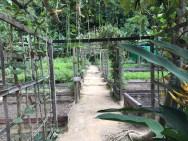 Resort garden in Mergui archipelago