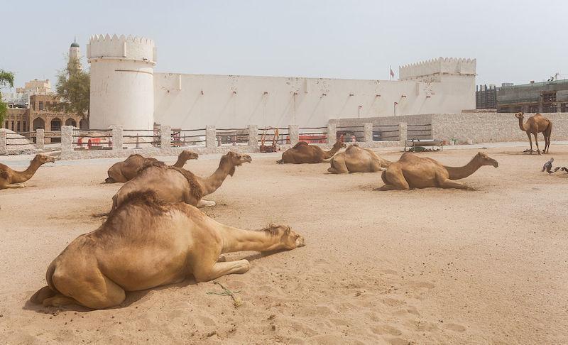 Al Koot Fort, Qatar