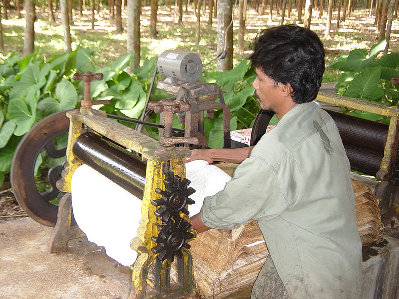 Processing rubber in Thailand