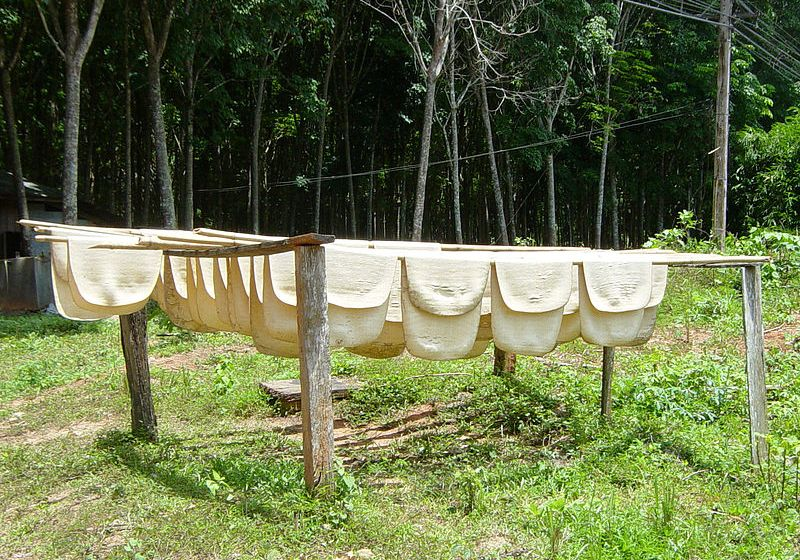 Drying rubber in Thailand