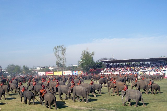 Surin Elephant Round-Up 2018 Getting Underway