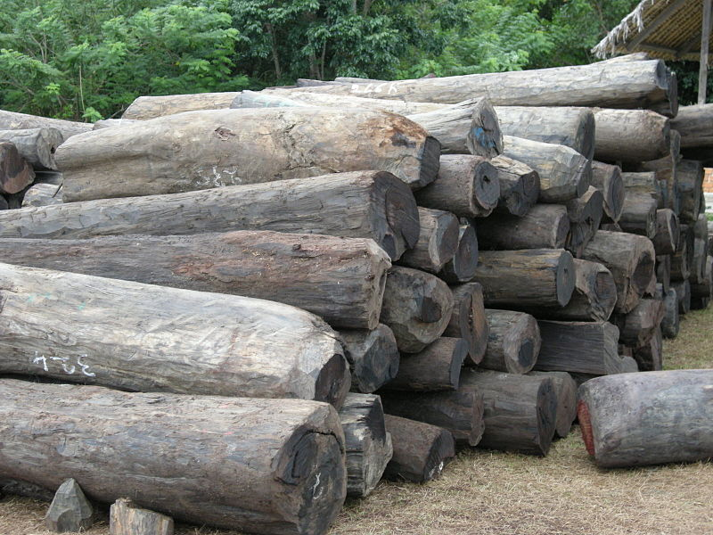 Illegal rosewood logs