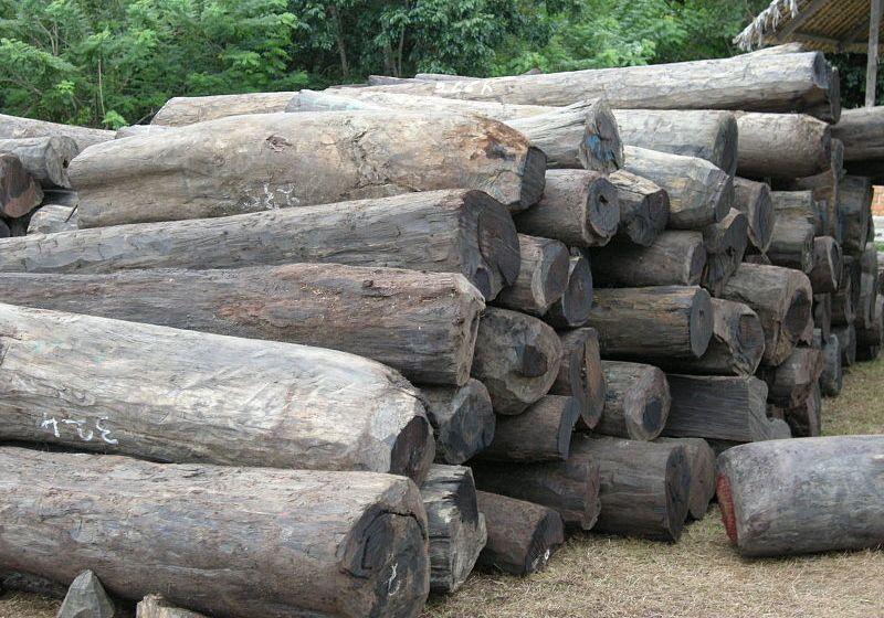 Illegal rosewood logs