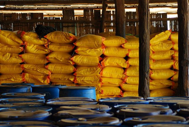 Thailand exports more than 3 million tons of rice in first four months