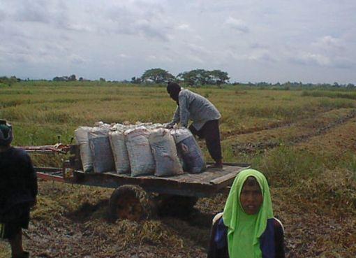 Farmers in Ban Sam Ruen, Phitsanulok