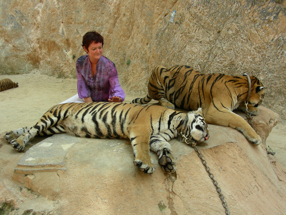 Officials Hunt for Abbot of Tiger Temple 2