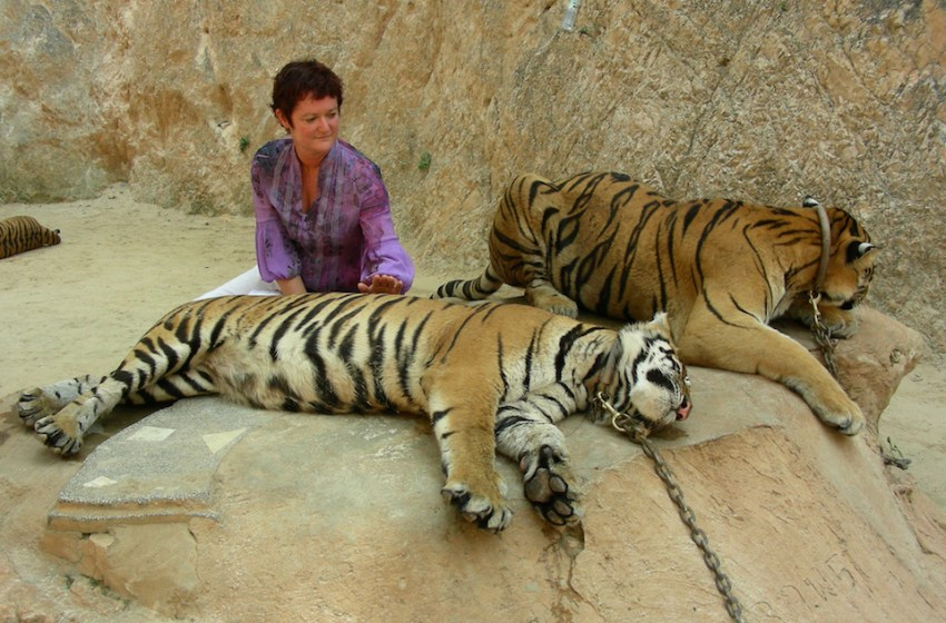Tiger Temple to Reopen 9 Months After Raid