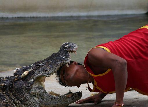 Crocodile show at Sriracha Tiger Zoo