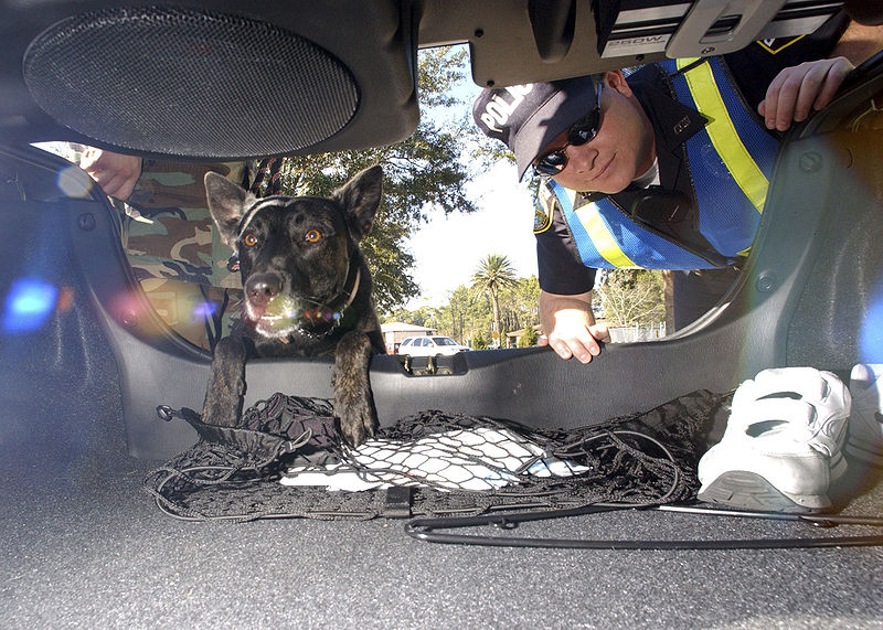 Thai police and a police dog inspecting a car