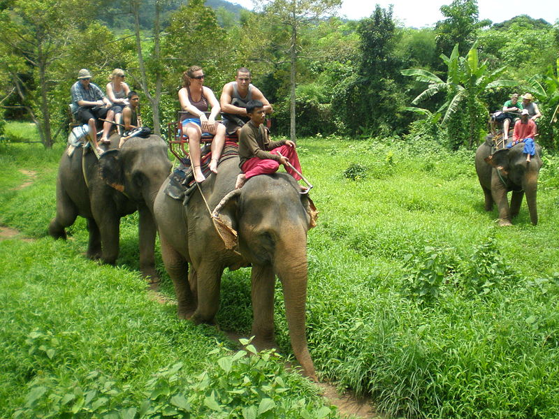 Elephant trek in Koh Chang