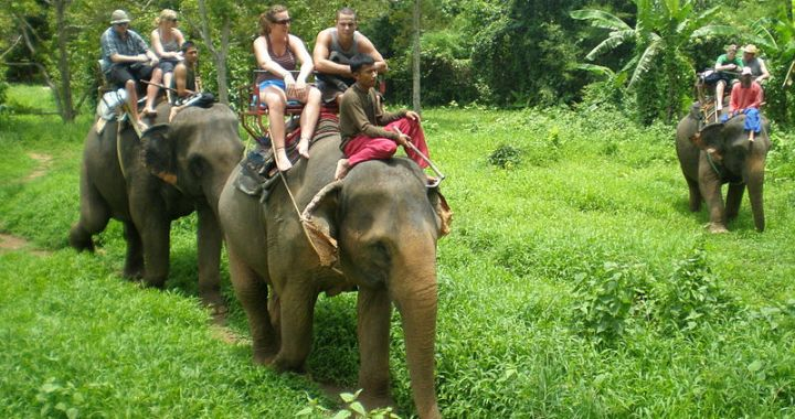 Two Italian tourists hurt when thrown from elephant
