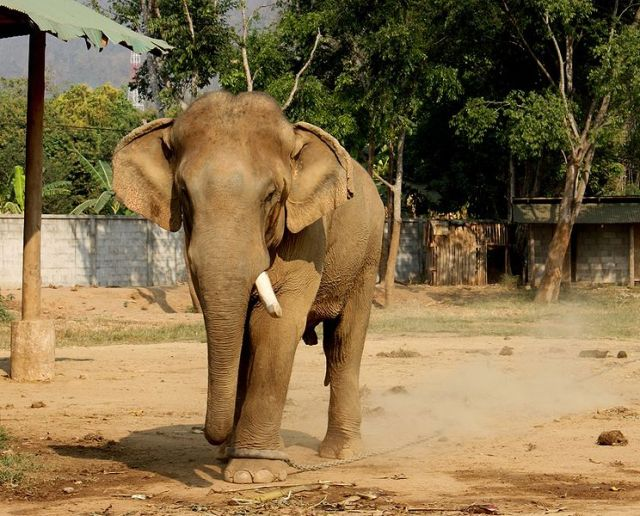 Food gatherer stomped to death by elephants